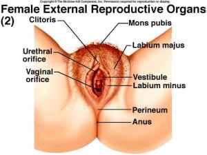 Penyebab masih terasa ada daging kecil di anus setelah operasi wasir