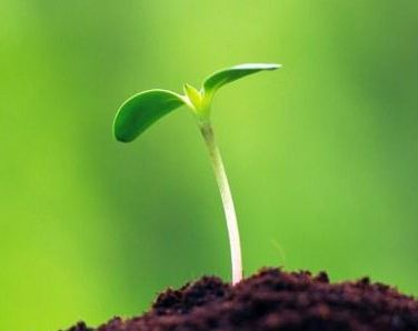 Cara Perkembangbiakan Tumbuhan Secara Generatif (Seksual)
