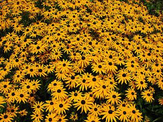flores, alergia, naturopatía
