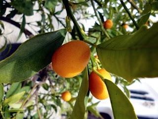 Plantas de interior y exterior de todo tipo para tu jard n - Vitaminas para plantas de interior ...