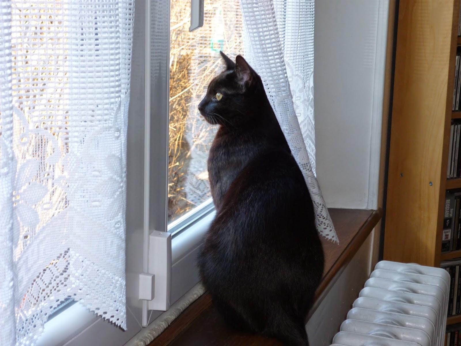 Уголёк Первый на окне