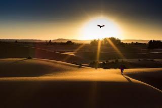 Un azor se aleja persiguiendo el sol poniente. Mil gracias por llegar hasta el final del relato, y un abrazo, querido lector.