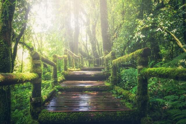 Adventure Beautiful Boardwalk Bridge HD Copyright Free Image