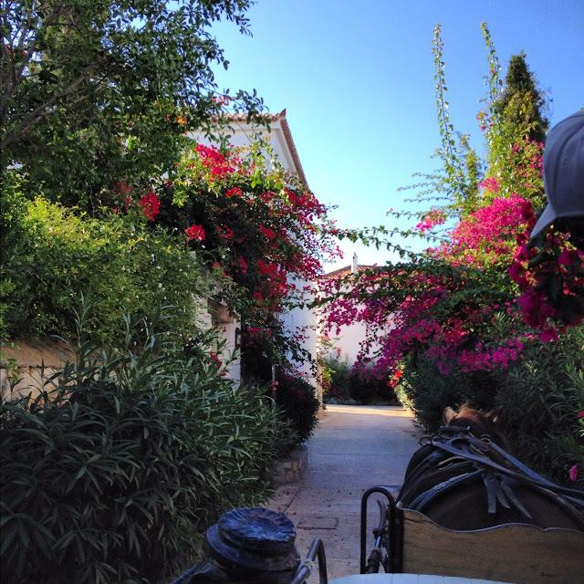 Spetses Adası: Tam Bir Yunan Güzeli
