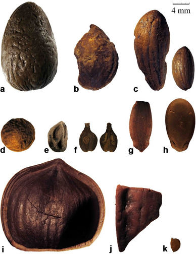 First evidence of fruit tree cultivation by the Phoenicians discovered in Sardinia