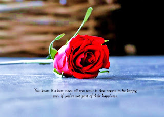 Single-red-rose-BG-with-beautiful-love-quotes-pictures.jpg
