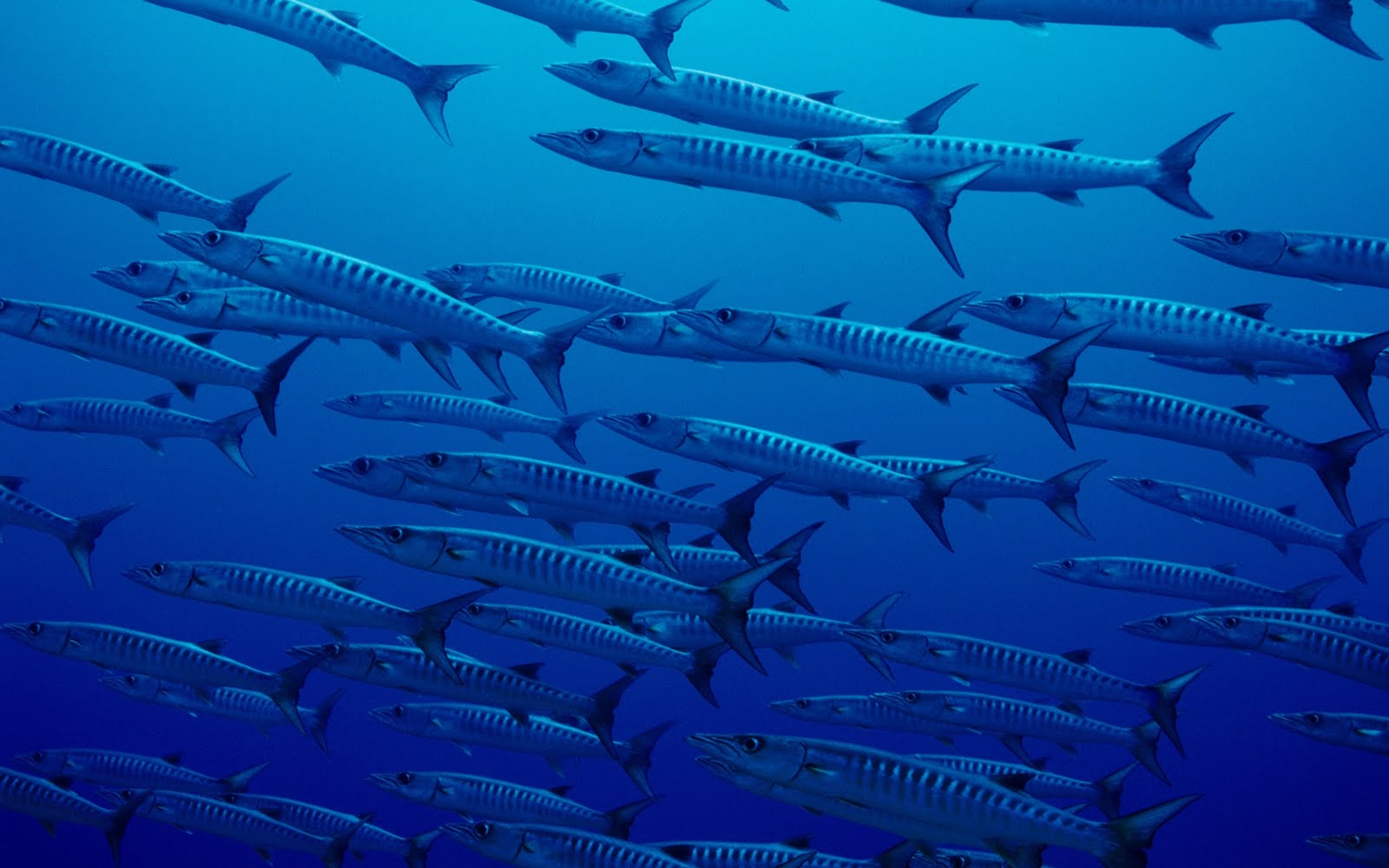 Top 27 Sea Animals Wallpapers In Hd: Sea Animal HD Wallpapers