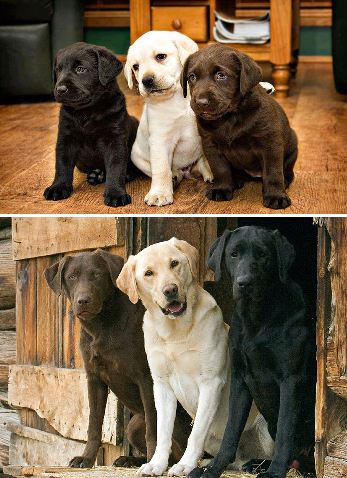 #2 Best Friends Forever - 15 Before & After Pics Of Animals Growing Up Together