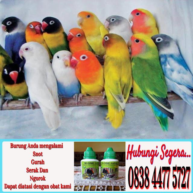 Obat Gacor Burung Ocehan
