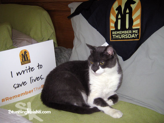 Remember Me Thursday—Cat Lives Matter