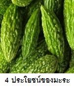 4 ประโยชน์ของมะระ