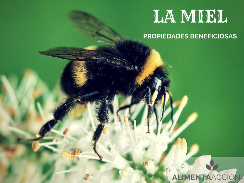 miel, propiedades saludables, salud, alimenta acción, alimentos, alimentación