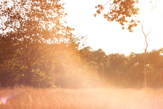 sie robi, jesien, herfst, autumn, sunset