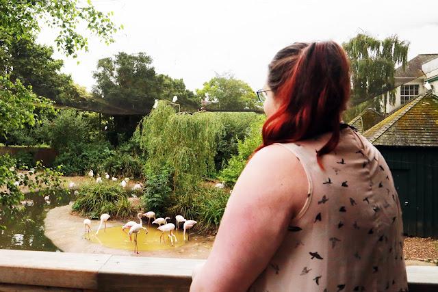 Bristol Zoo Summer Evenings Opening Hours Clifton Bristol