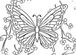 coloring page butterfly 1
