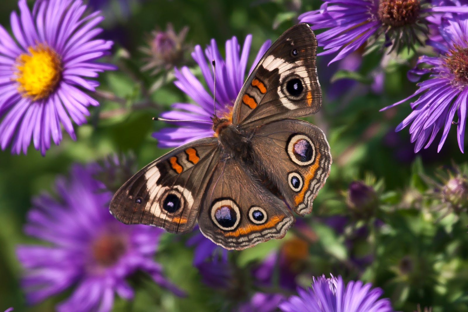 Butterfly - photo#47