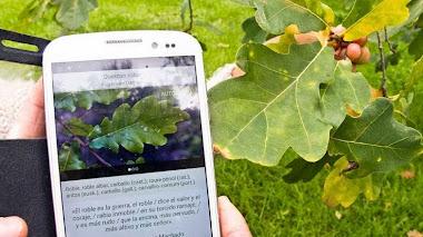 Arbolapp. Nueva aplicación gratuita para identificar árboles silvestres