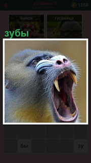в открытой пасти обезьяны видны зубы и острые клыки торчат