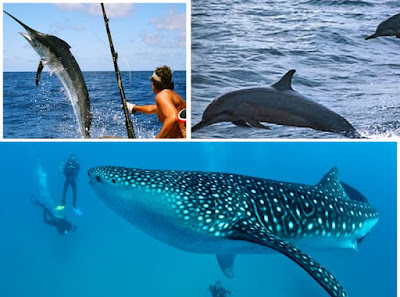 travel maldives on low budget