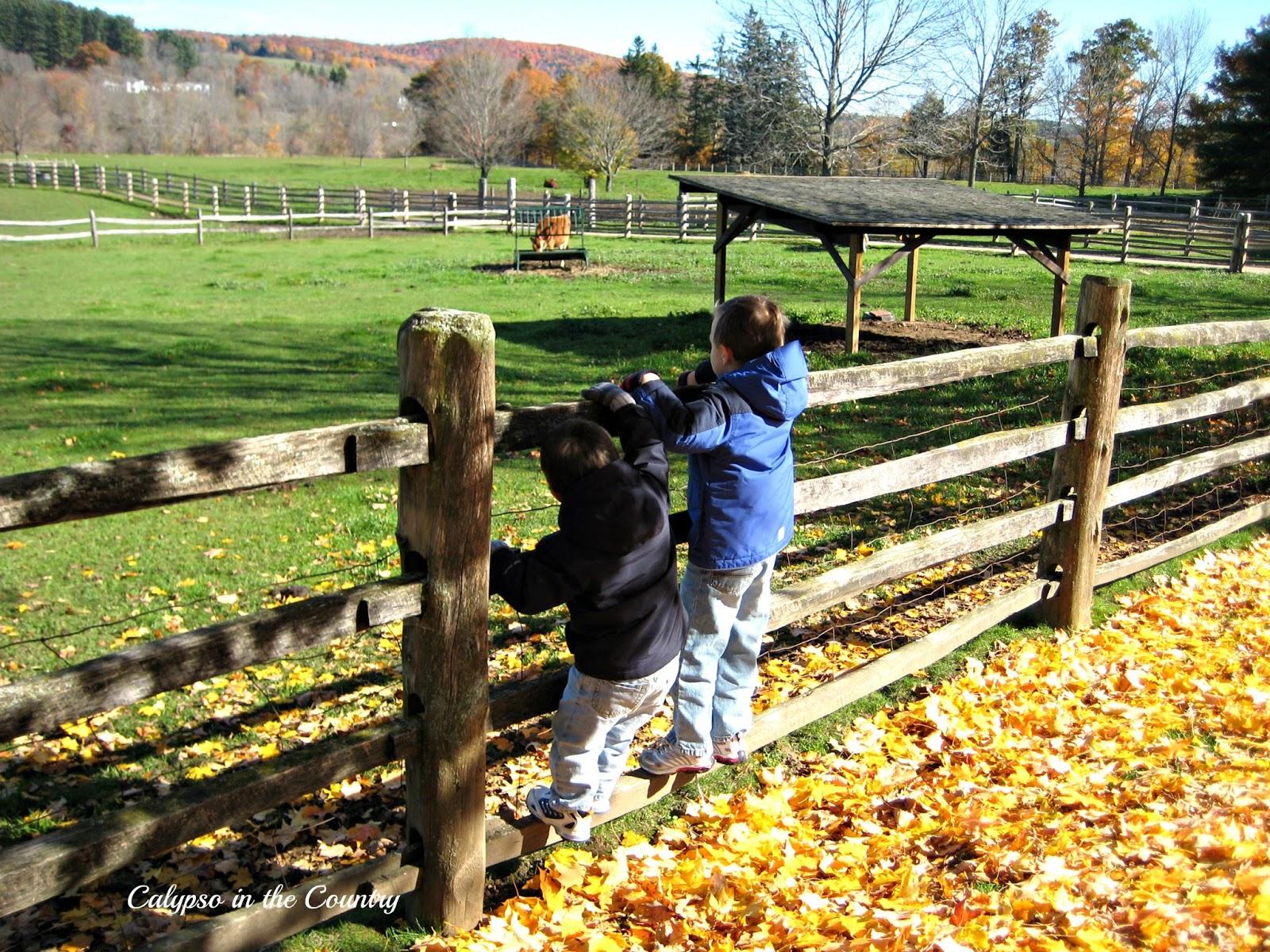Vermont farm scene - boys climbing the fence