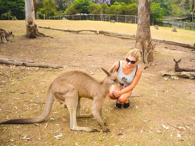 where to see kangaroos in australia