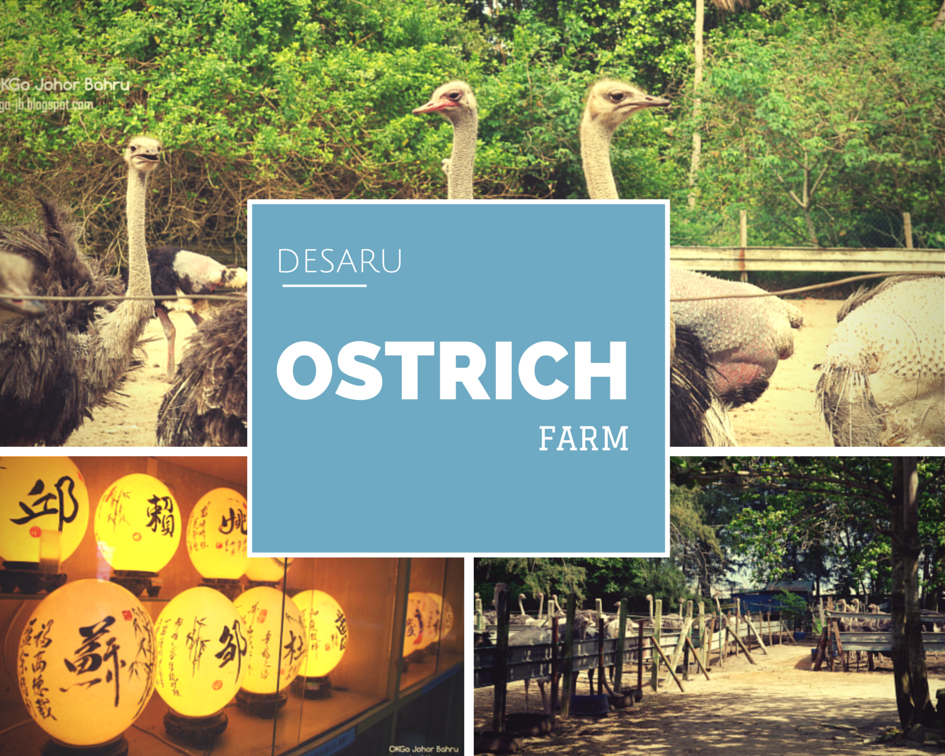 Desaru ostrich farm day tour