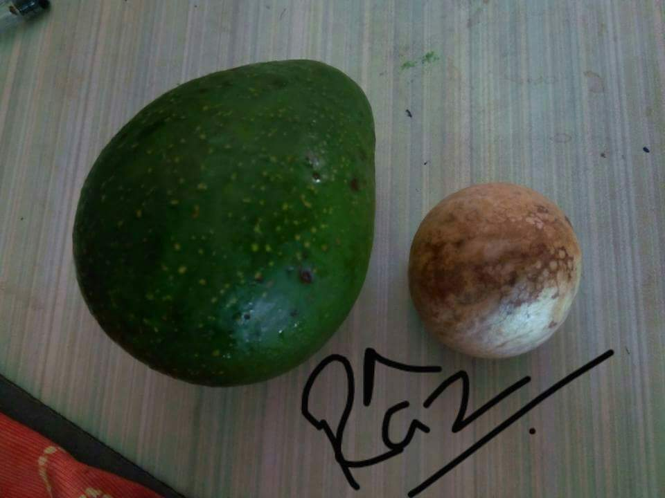 how to grow snake fruit from seeds