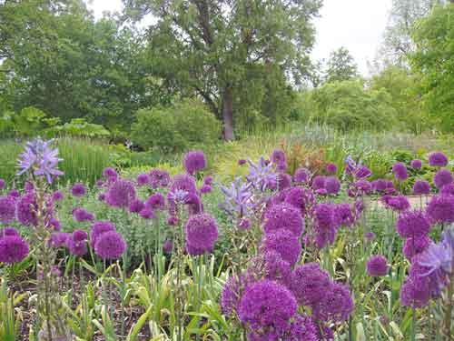 University of Oxford Botanic Garden, Oxford, England.