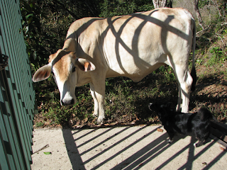small dog with a bull