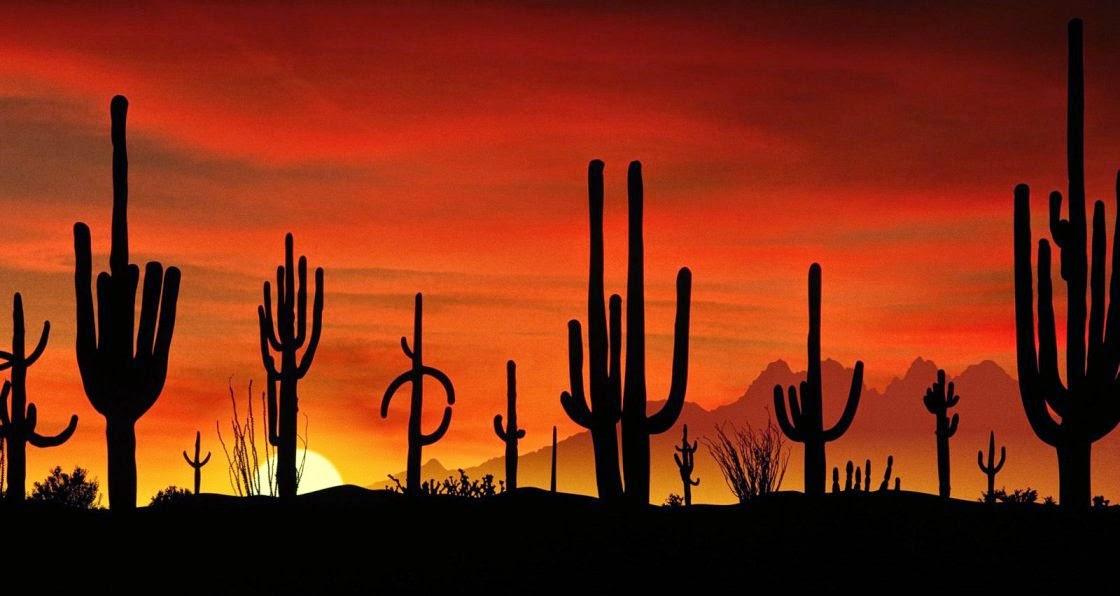 Los saguaros, los desiertos y el agua