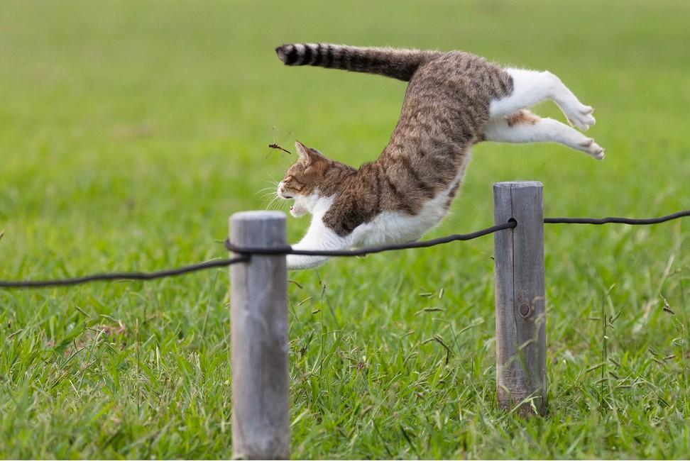 соседнего картинка кот бежит на работу водяным контуром можно