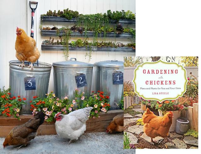 Using Chicken Manure in the Garden   Fresh Eggs Daily®