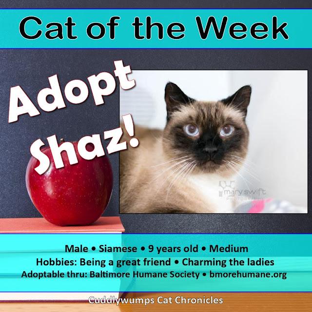 Adopt Shaz!