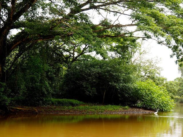Caño Negro, near La Fortuna & Arenal, Costa Rica