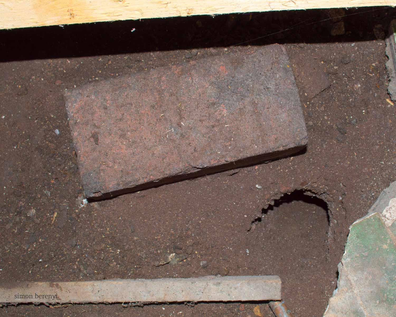 rat burrow under house floor
