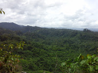 Manfaat Hutan Untuk Kelangsungan Hidup Manusia