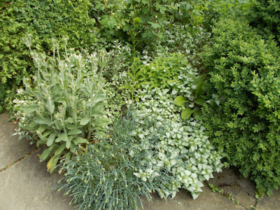 Silver foliage plants Inspiring ideas from Hidcote Green Fingered Blog