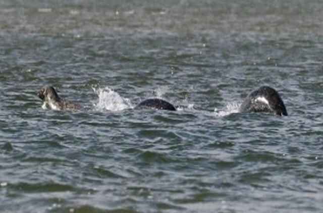 Gambar Raksasa Tasik Loch Ness Munculkan Dirinya Sekali Lagi