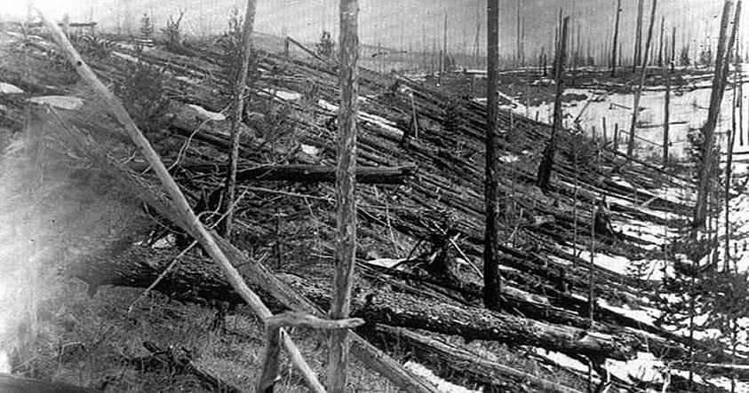El aspecto del bosque de Tunguska, 45 años después de la gran explosión.