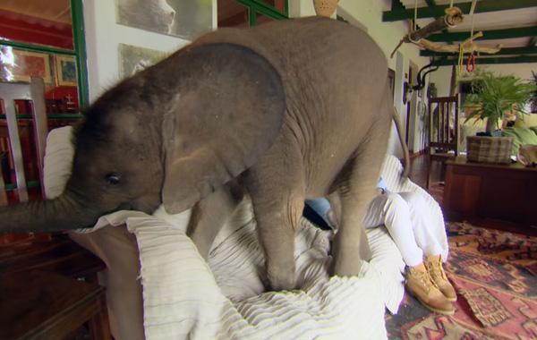 Ai còn nuôi chó mèo nữa, bà ấy nuôi voi trong nhà đây này
