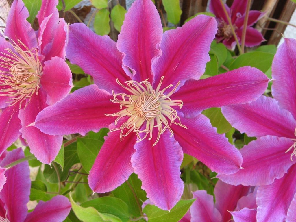 Guerriero della luce fiori del mondo 2 for Fiori di agosto