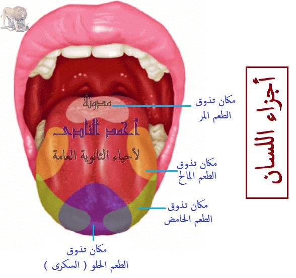 الهضم فى الإنسان -الهضم فى الفم - اللسان - تذوق وتحريك الطعام - مدونة أحمد النادى - أحياء الثانوية العامة