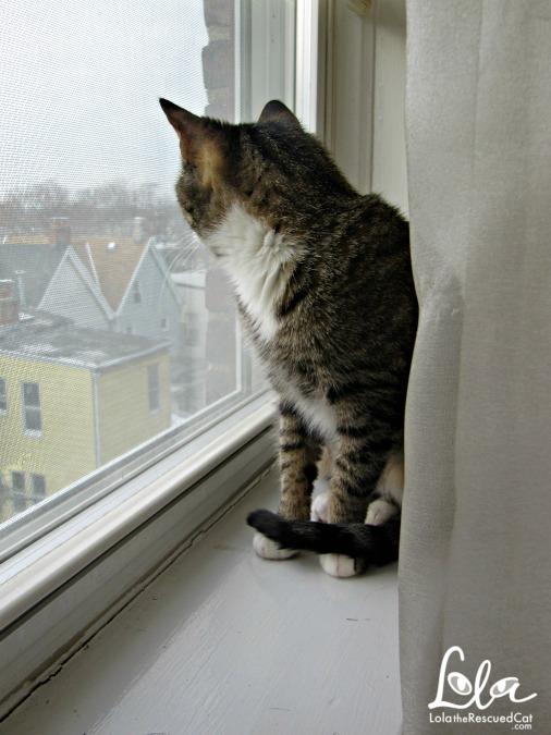 Tabby cat in window
