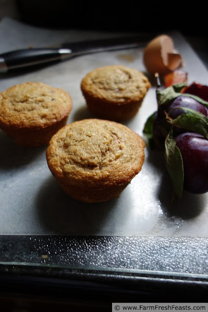 Plum and whey-soaked oat muffins