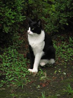 前脚が色違いの白黒猫