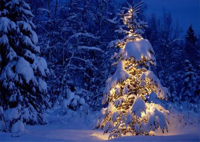 leggenda-albero-di-Natale.