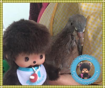 Baby le bebichhichi et Colombine le bébé pigeon - oisillon - oiseau - pigeon