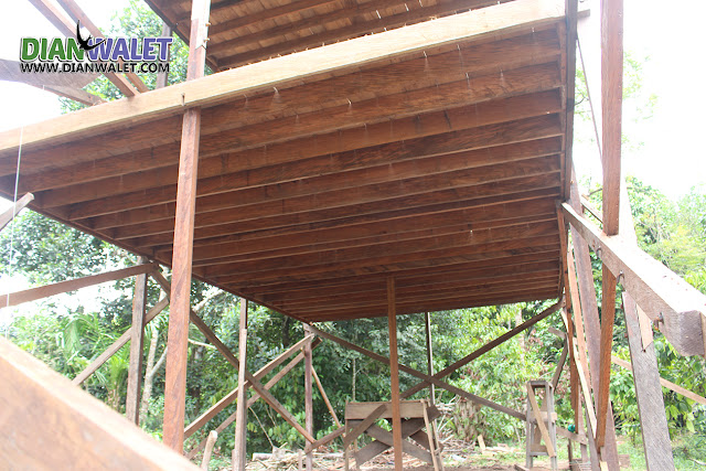 Rumah Sarang Burung Walet Dari Rangka Ulin