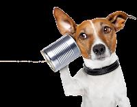 Cachorro ouvindo png
