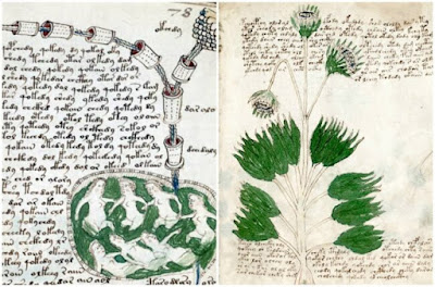 مخطوطة Voynich